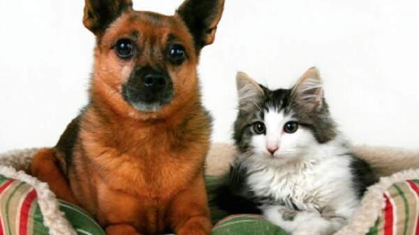 Dicas para adotar um pet da maneira mais adequada