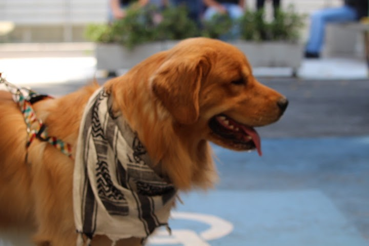 C&A realiza Dogs Day