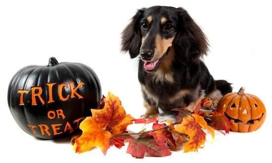 Halloween para pets e humanos